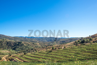 Vineyards and vine in the hills of the Montsant county, Spain
