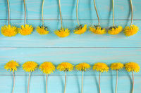 Yellow dandelions on a blue background