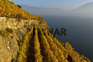 Terrassierte Steillagen im Weinanbaugebiet Lavaux über dem Genfersee,Lavaux, Waadt, Schweiz
