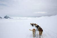View From Dog Sled on Snow