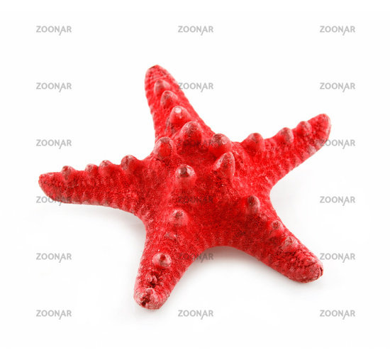 Red Starfish Isolated on a White