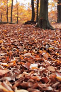 Waldboden bedeckt mit Herbstblättern im Detail, hochkant
