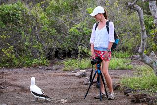 Young woman photographing Nazca Booby, Genovesa Island, Galapagos National Park, Ecuador