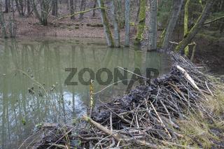 Beaver dam from european beaver