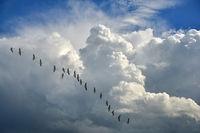 Migratory birds fly south