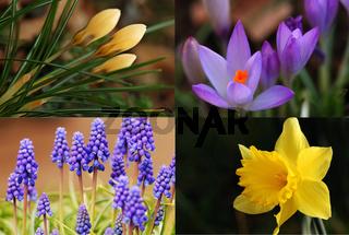 Vier Frühlingsklassiker komplementär