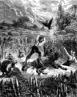 Hunting condors. They kill birds with sticks, vintage engraving.