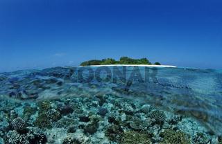 Korallen vor Malediveninsel