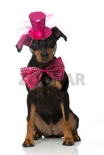 Hund mit Hut und Fliege