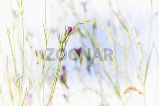 Kleine, violette Blüten an einer Pflanze, Bild mit weichem Bokeh und Textfreiraum.