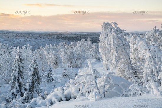 Winter landscape, Lapland, Sweden
