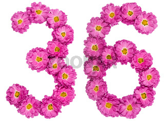 Arabic numeral 36, thirty six, from flowers of chrysanthemum, isolated on white background