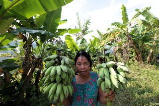 Eine Baeuerin in Ihrer Bananenplantage in der Bergregion beim Dorf Muang Phou Khoun an der Nationalstrasse 13 zwischen Vang Vieng und Luang Prabang in Zentrallaos von Laos in Suedostasien.