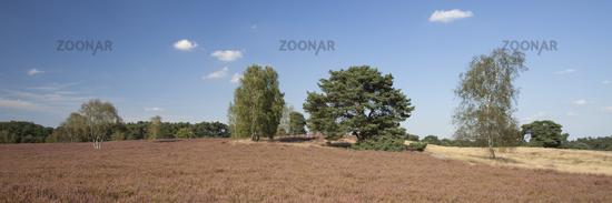 Blossom heathlands