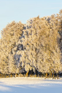 Field with hoarfrost on the trees at the forest edge