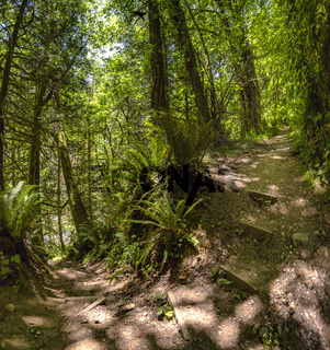 A path in the fairy green forest. Kamiak Butte State Park Campground, Whitman County, Washington, USA