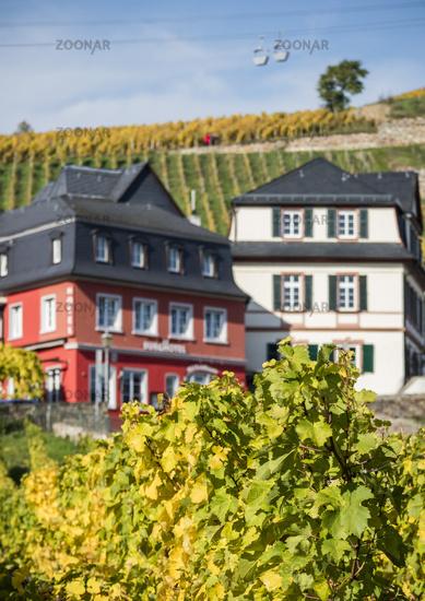 autumnal vineyards in Rüdesheim am Rhein, Germany