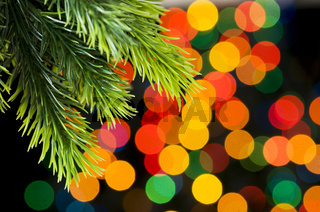 Close up of tree against blurred lights
