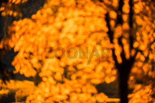 defocused red leaves, perfect autumn background