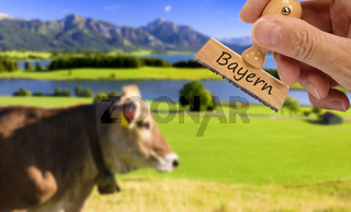 Allgäu mit Alpen, Forggensee und Kuh