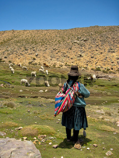 Lama Herde in Peru / Woman with Lamas