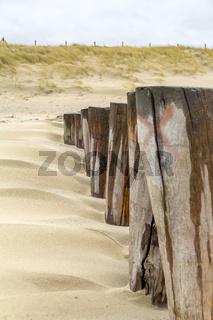 overgrown beach detail