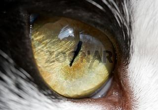 Eye of a cat - detailed closeup