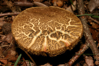 Pilz / Mushroom