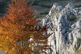 Beech tree and rock formation, Eselsburger Tal, Swabian jura, Germany
