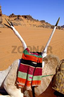 Tuareg Sattel, Sahara