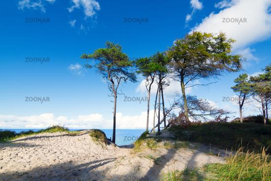 Baltic sea close to Prerow