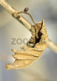 Blatt im Winter - leaf in winter