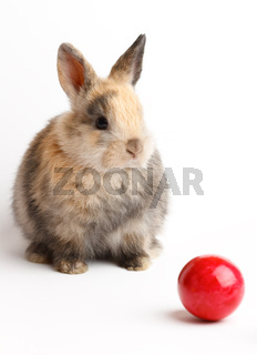 A rabbit with easter eggs isolated on white background