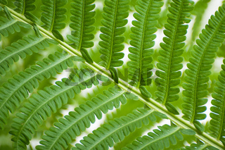 A leaf of a wild fern close-up.