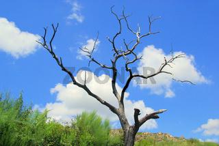 Baum abgestorben