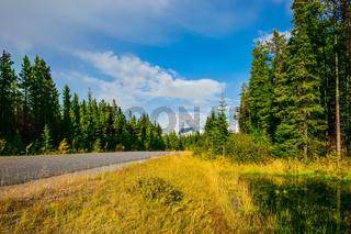 The highway passes among yellow woods
