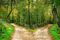Forest with paths in two directions