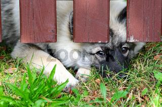 Hund Zaun eigesperrt