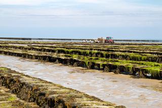 Austernfarm auf der Kanalinsel Jersey