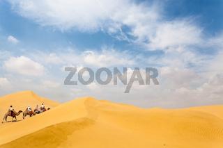 camel team in desert