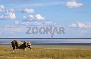 Elefant vor der mit Wasser gefüllten Etosha-Pfanne; Elephant at the Etosha Pan with water