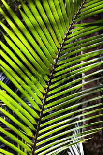 Detailaufnahme Farn im Regenwald in Costa Rica