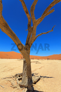 Dead Vlei im Namib Naukluft Nationalpark