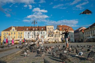Girl feeding pidgeons in the Old Town in Bydgoszcz