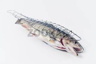 Saibling  [Salvelinus alpinus] in einer Fischgrillzange - arctic char  [Salvelinus alpinus]