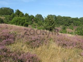 Die Lüneburger Heide
