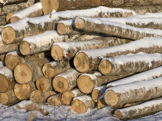 Close up of log's stack in sunny winter day