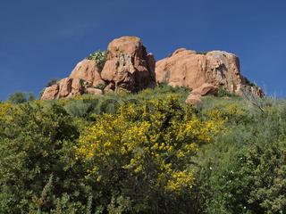Felslandschaft mit Ginsterblüte bei Arbatax, Sardinien