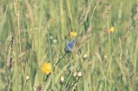 Blue butterfly on a summer meadow