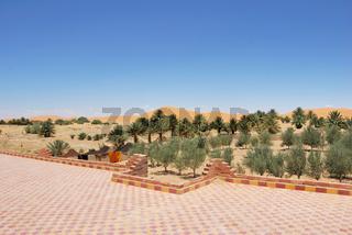 Dünenvegetation und Sanddünen am Rande der Wüste, Erg Chebbi, Marokko, Afrika